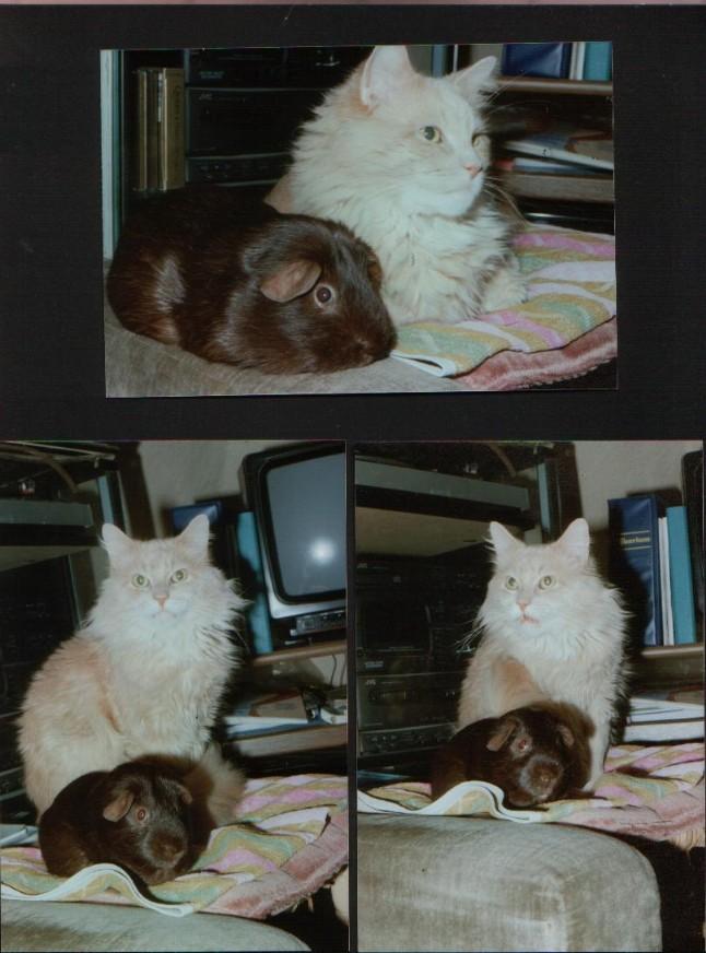 Kleinschwein und Calli